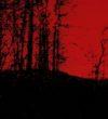 contactless_art_wall_Fireflies_ I_ digital_ art_ 2020_galateca g